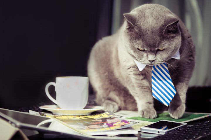 Business cat respond to mobile
